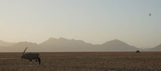 There are animals everywhere-even out in the middle of nowhere in the Namib desert