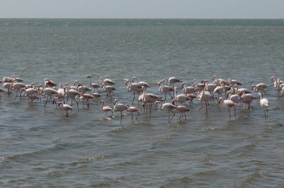 Residents of Walvis Bay